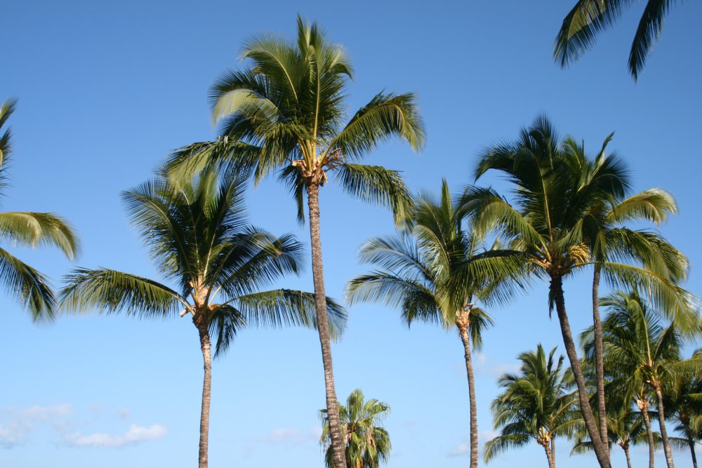 Maui_2011_Day_One-Two_005.JPG