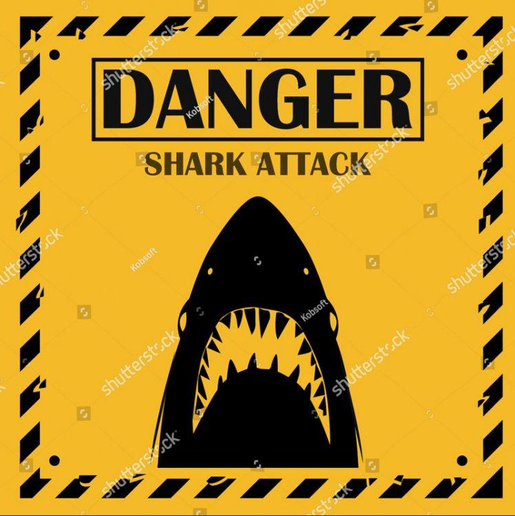5a830d23efa64_Sharkattack.thumb.jpg.7436507149dc3a654012614f3edcfb48.jpg